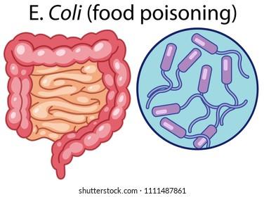 A Vector of E Coli Bacteria illustration