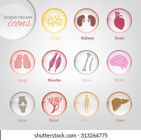 Vector editable collection of human body parts icons. Blood in transparent glossy style. Useful for inforchart and infographic