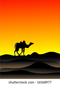 vector Egypt and camel sunset background