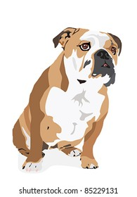 Vector from an English Bulldog isolated on a white background