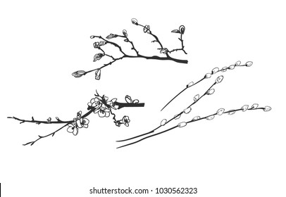 vector engrave spring branches willow