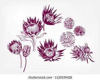 vector engraved design elements sketch flower decorative design elements ink set protea