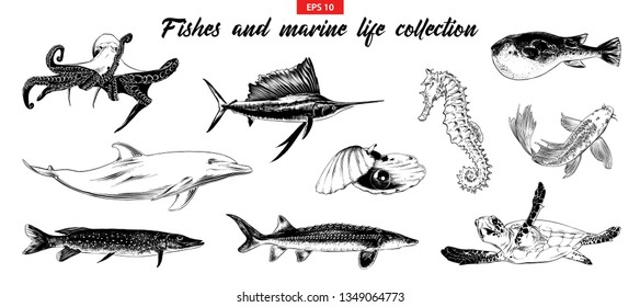 Vector engraved style illustration for logo, emblem, label or poster. Hand drawn sketch set of fishes and marine life. Isolated on white background. Detailed vintage doodle drawing.