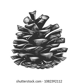 Vector engraved style illustration for posters, decoration and print. Hand drawn sketch of pinecone in monochrome isolated on white background. Detailed vintage woodcut style drawing.