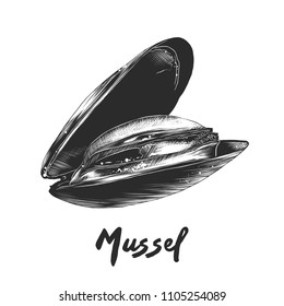 Vector engraved style illustration for posters, decoration and print. Hand drawn sketch of mussel in monochrome isolated on white background. Detailed vintage woodcut style drawing.