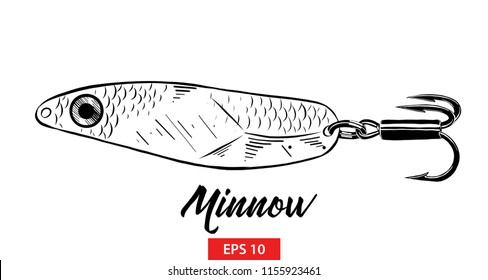 Vector engraved style illustration for posters, decoration and print. Hand drawn sketch of fish minnow in black isolated on white background. Detailed vintage etching style drawing.
