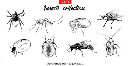 Vector engraved style illustrations for posters, logo, emblem and badge. Hand drawn sketch set of insects, fly, sucker, mosquito, bug, wasp, mite, cockroach. Detailed vintage etching drawing.
