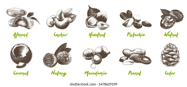 Vector engraved style organic nuts bundle for posters, decoration, packaging, menu, logo, emblem. Hand drawn monochrome sketches isolated on white background. Detailed vintage woodcut drawing.