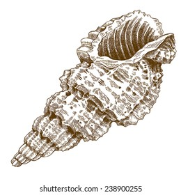 Vector engraving antique illustration of a conch shell isolated on white background