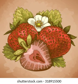 Vector engraving antique illustration of strawberry in retro style