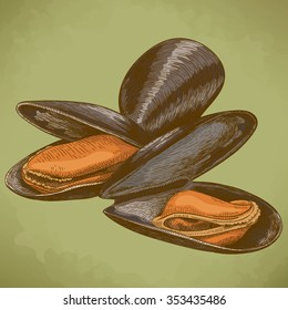 Vector engraving illustration of highly detailed hand drawn mussel in retro style