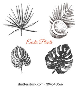 vector exotic hand drawn palm leaf, coconut, tropical flower