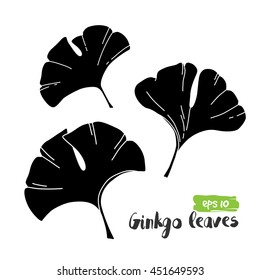 Vector exotic tropical ginkgo leaves, jungle foliage set isolated on white background. Black and white flat monochrome style.