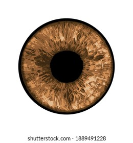 Vector Eye - Close-up of Human Eye on white Background