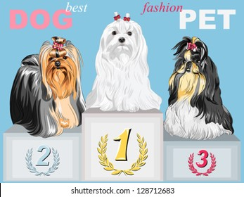 Vector fashion Dog champion long-haired breeds with beautiful hairstyles on the podium