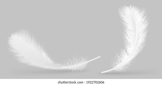 Vector feather isolated on grey background. Design template, clipart