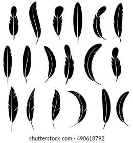 Vector Feather Silhouette Collection Isolated on White Background