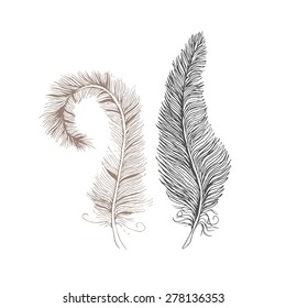 Vector feathers line drawing. Line art feather isolated on white
