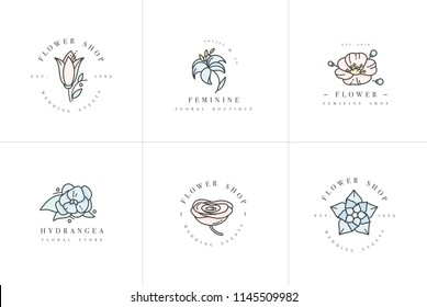 Vector feminine signs and logos, templates set. Floral Illustration-hydrangea, ranunculus, anemone and lily. Premium quality colorful emblems