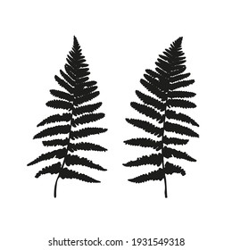 Vector fern leaves isolated black. Realistic  leaves illustration set on white background.