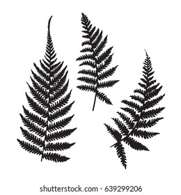 Vector fern silhouette collection. Black isolated prints of fern leaves on the white background.