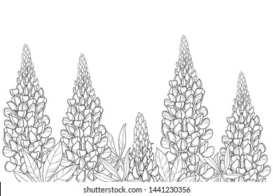 Vector field with outline Lupin or Lupine or Bluebonnet flower bunch, bud and ornate leaves in black isolated on white background. Contour decorative plant Lupin for summer coloring book.
