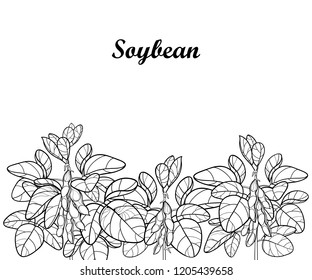 Vector field with outline Soybean or Soy bean with pods and ornate leaf in black isolated on white background. Bunch of legume plant Soya in contour for vegetarian food drawing or coloring book.