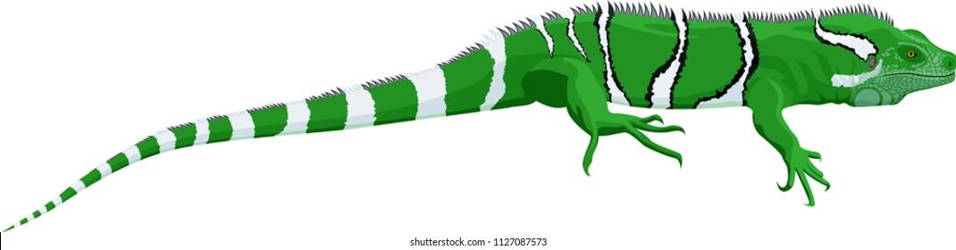 vector Fiji banded iguana