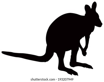 vector file of kangaroo