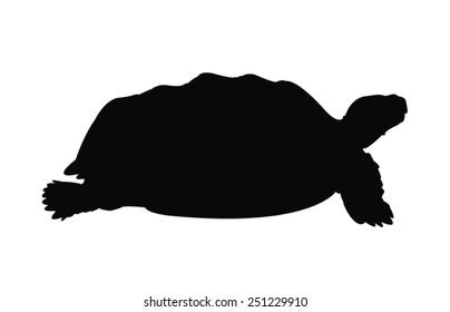 vector file of turtle silhouette