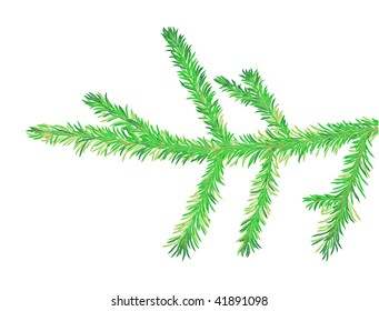 Vector fir tree branch, is isolated on a white background