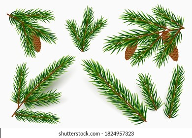 Vector fir tree branches isolated on white background. Realistic green pine branch with cones. Design element for winter holidays. Spruce boughs in different shapes. Traditional Christmas decoration.