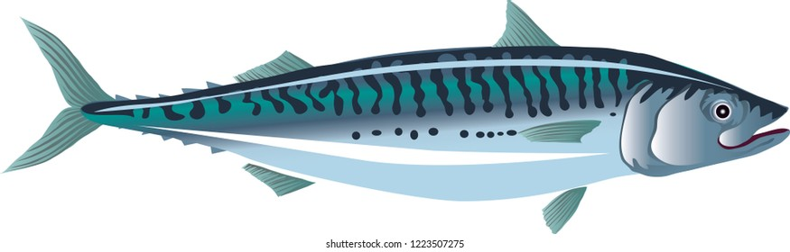 Vector - Fish Mackerel, Demersal Marine Fish