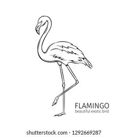 Vector flamingo. Exotic tropical bird. Hand drawn illustration for summer tropical paradise advertising vacation design.