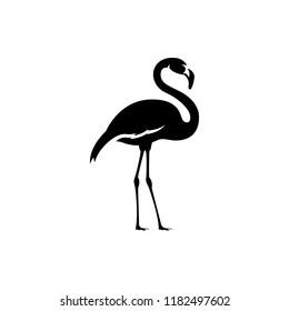 vector flamingo silhouette, exotic bird