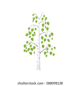Vector flat birch tree isolated. Single silver birch with green leaves on white background