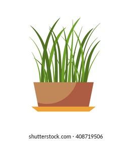 Vector flat house plant pot illustration.