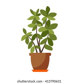 Vector flat house plant pot illustration. Colorful house plant in pot for your design.