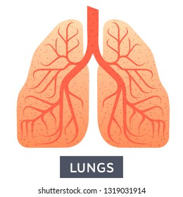Vector flat illustration, big human lungs on white background, medical research. For medical textbooks, manuals, design offices of doctors and pulmonologists and pharmacies
