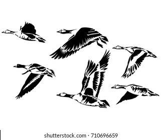 Vector flat illustration of black silhouette flying geese on white background. Element for design.