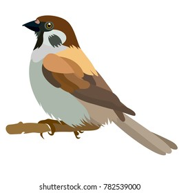 Vector flat illustration of colorful sparrow on white background. Element for design. Cartoon. Little bird.