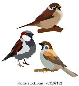 Vector flat illustration of colorful sparrows on white background. Elements for design. Little birds. Cartoon. Spring design.