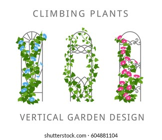 Vector flat illustration of garden trellis with climbing plants. Colored icons of vertical gardening isolated on white.