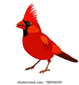 Vector flat illustration of red cardinal on white background. Element for design. Little bird.
