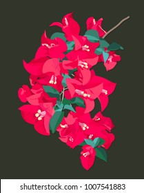 Vector flat style, bright pink bougainvillea with leaves on dark green background