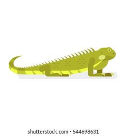Vector flat style illustration of iguana. Icon for web. Isolated on white background.
