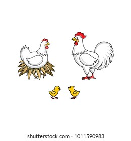 vector flat white rooster, cock with red crest, hen chicken in hay nest and yellow chicks. Isolated illustration on a white background. Farm poultry advertising, poster design.