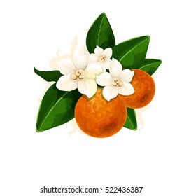 Vector Fleur d'Orange illustration. Digital watercolor simulation illustration. Detailed colored blossom picture. Isolated on the white background