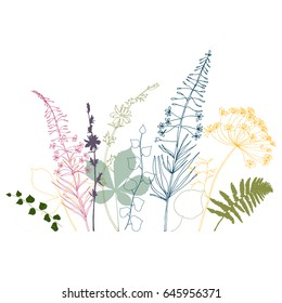 Vector floral background  with  fireweed, chicory, dill flowers and fern, ivy and chestnut tree leaves. Hand drawn thin lines meadow wild plants in pink, gray, blue and green on white background