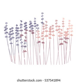 Vector floral background with lavender flowers in a row. Soft pastel shades of pink and lilac colors . Watercolor effect style. Perfect for invitation cards, posters, banners, web design.